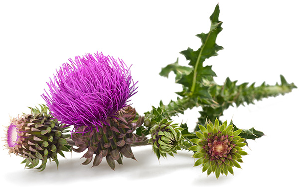 She Is a Thistle Sifter - Nursery rhyme - Music, tune and lyrics